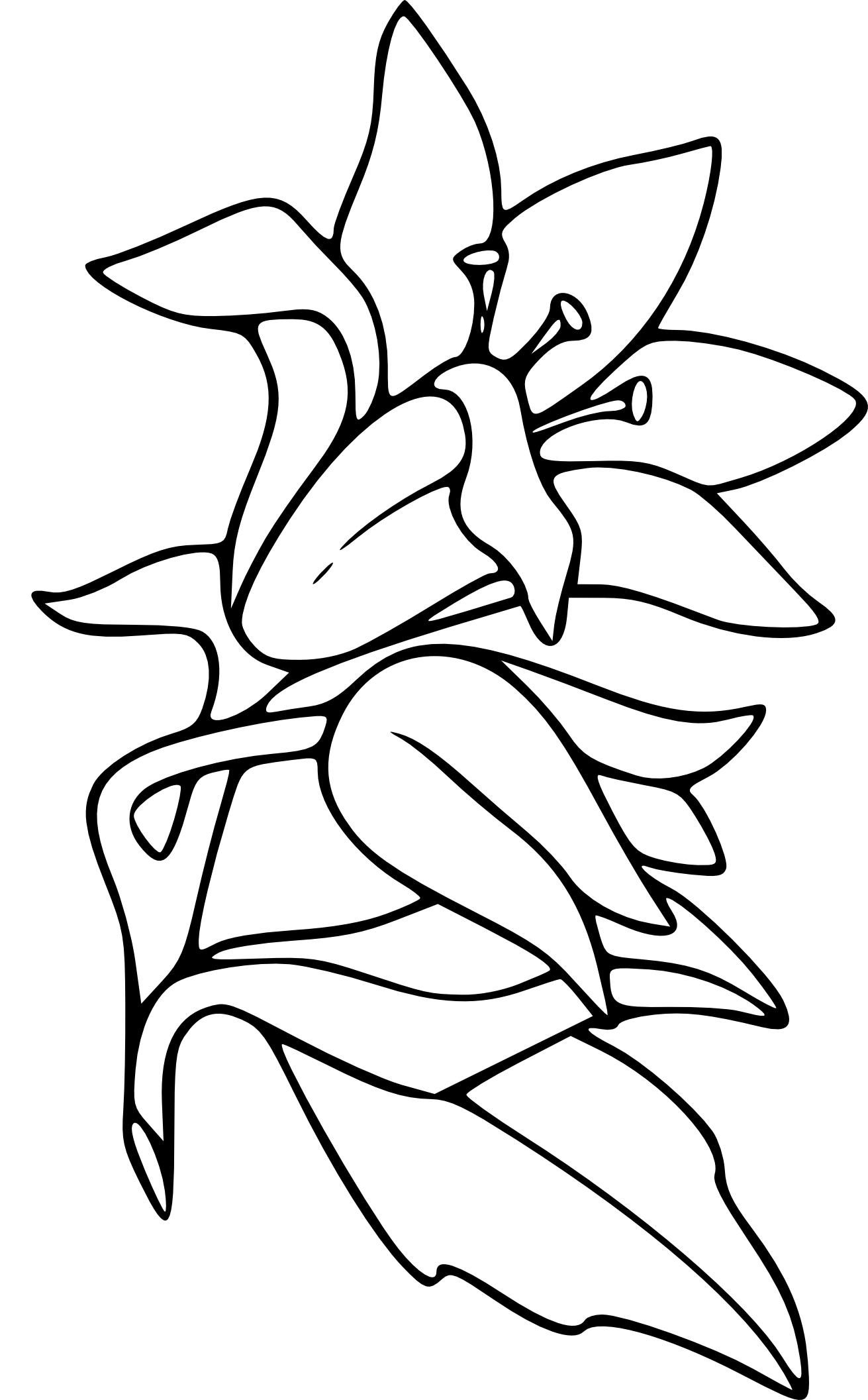 Coloriage Fleur De Lys À Imprimer encequiconcerne Dessin A Colorier De Fleur