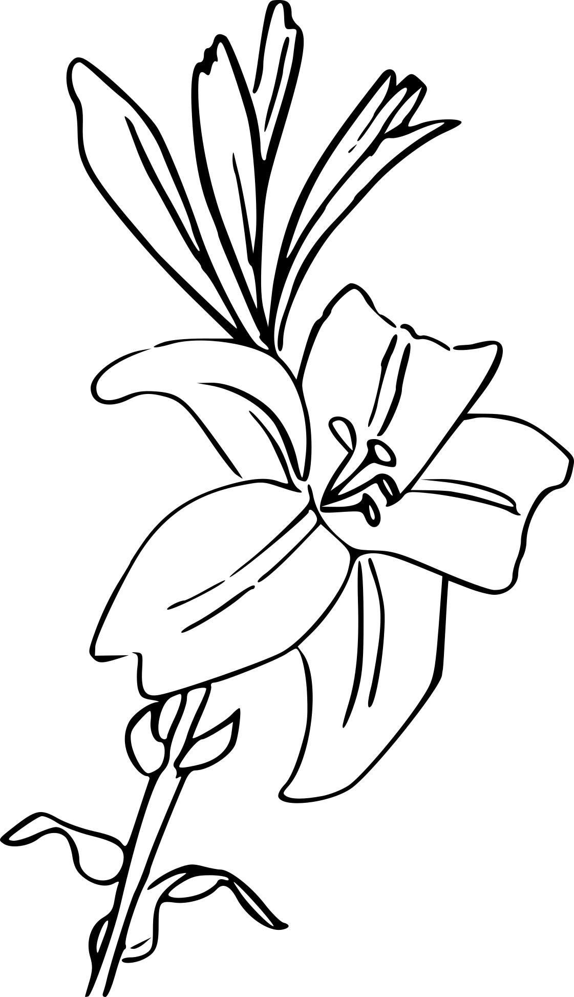 Coloriage Fleur Lys À Imprimer Sur Coloriages pour Dessin A Colorier De Fleur