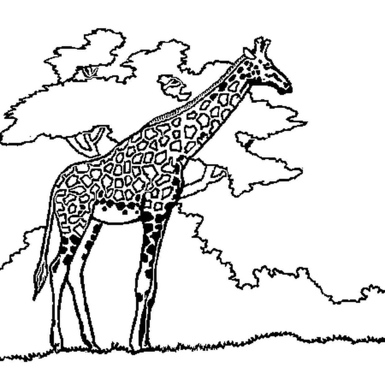 Coloriage Girafe En Ligne Gratuit À Imprimer serapportantà Jeux De Girafe Gratuit