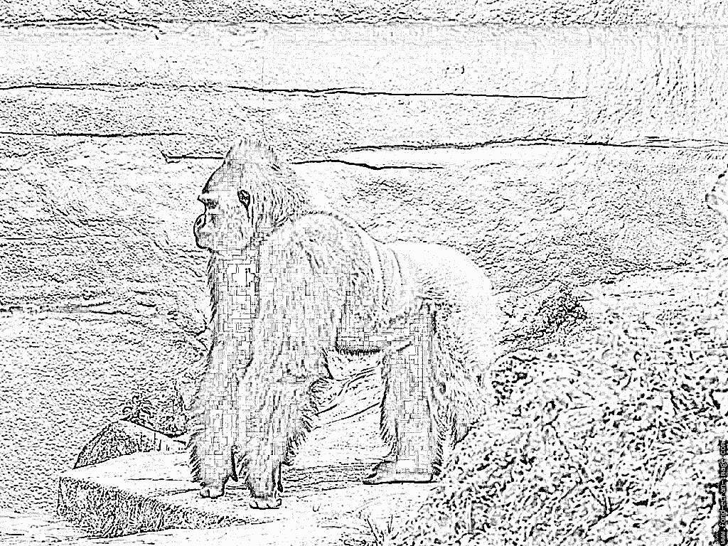 Coloriage Gorille 20100622 À Imprimer Pour Les Enfants - Dessin avec Coloriage Gorille