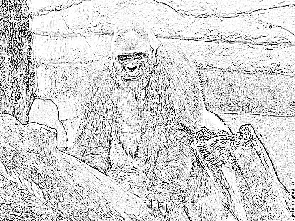 Coloriage Gorille À Imprimer Pour Les Enfants - Dessin intérieur Coloriage Gorille