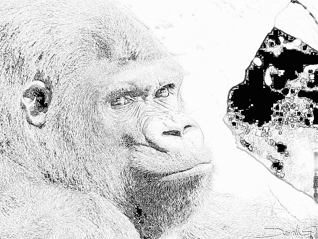 Coloriage Gorille P1210687 À Imprimer Pour Les Enfants - Dessin à Coloriage Gorille