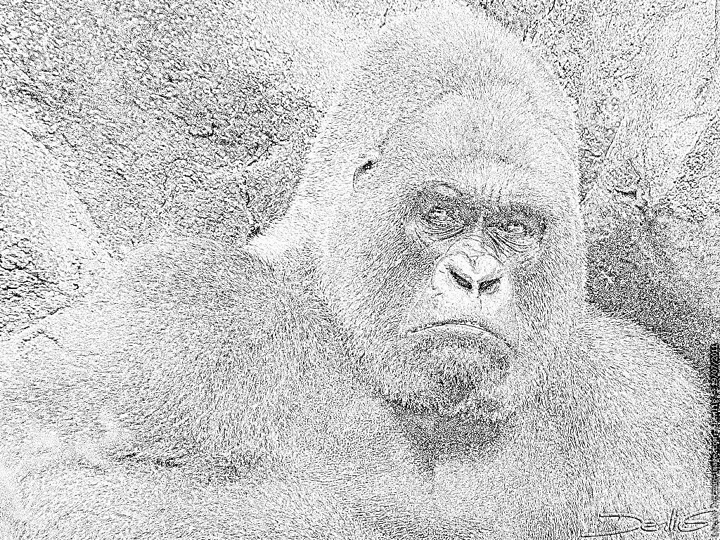 Coloriage Gorille P1210694 À Imprimer Pour Les Enfants - Dessin pour Coloriage Gorille
