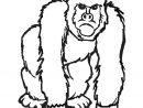 Coloriage Gorille Pas Content En Ligne Gratuit À Imprimer destiné Jeux De Gorille Gratuit