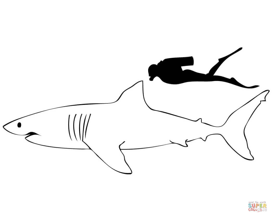 Coloriage - Grand Requin Blanc Comparé À Un Homme avec Coloriage Requin Blanc Imprimer