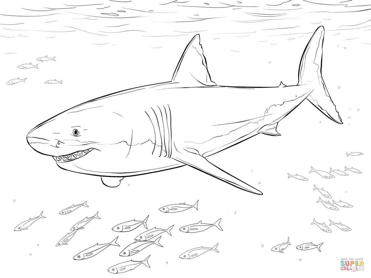 Coloriage - Grand Requin Blanc Et Poissons-Pilotes dedans Coloriage Requin Blanc Imprimer