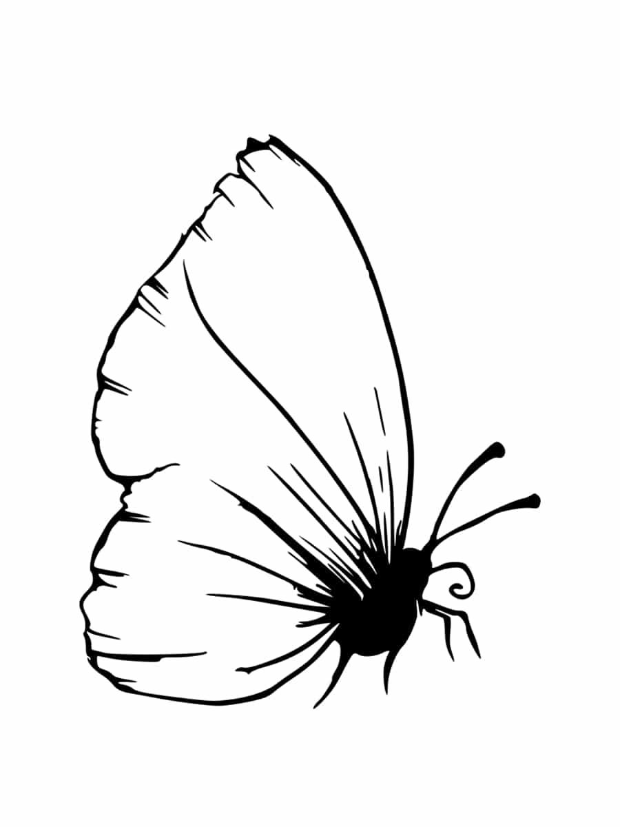 Coloriage Insecte : Dessins À Imprimer Gratuitement tout Dessin Papillon À Colorier