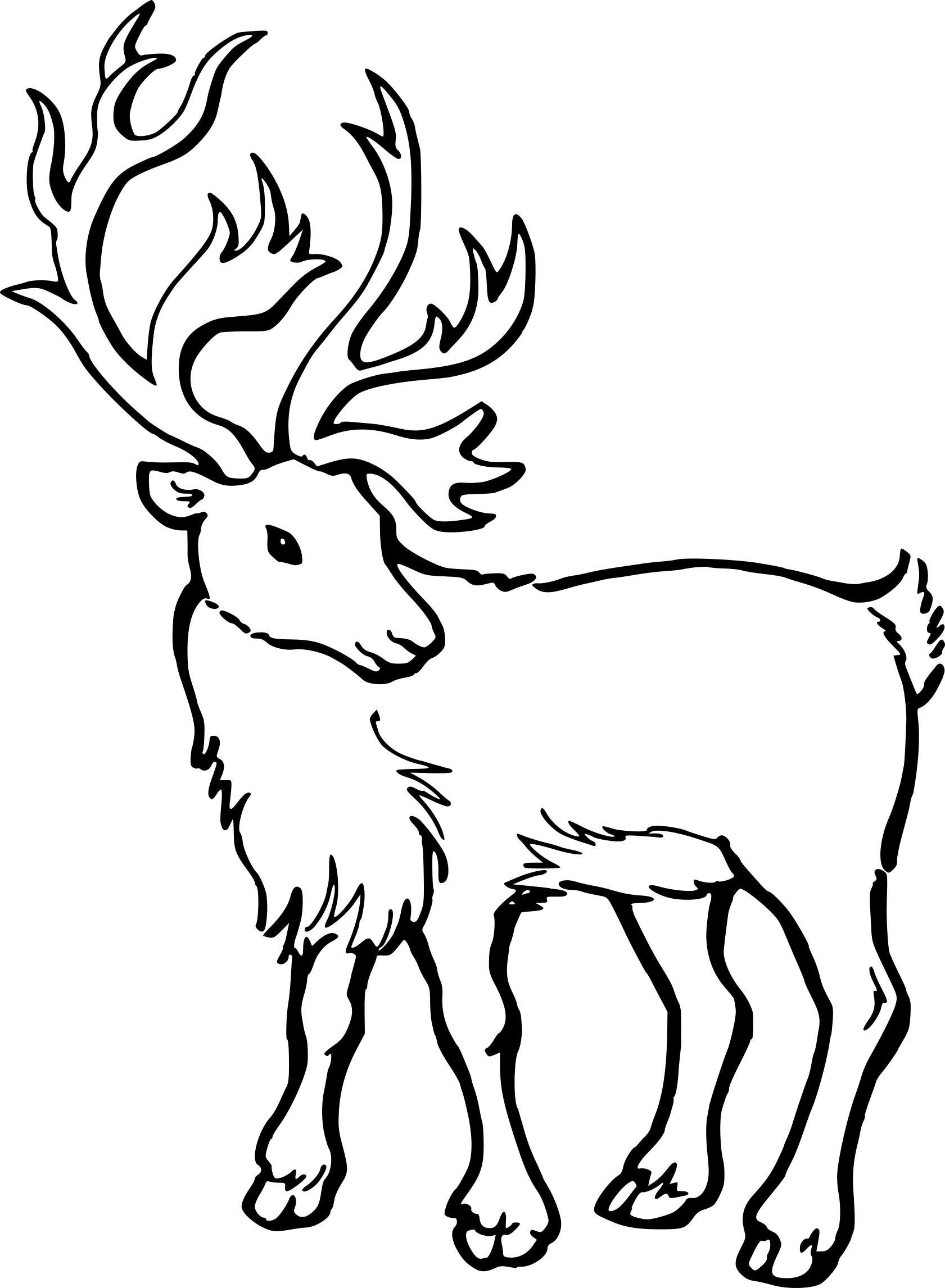 Coloriage Jeune Caribou À Imprimer Sur Coloriages à Caribou Dessin