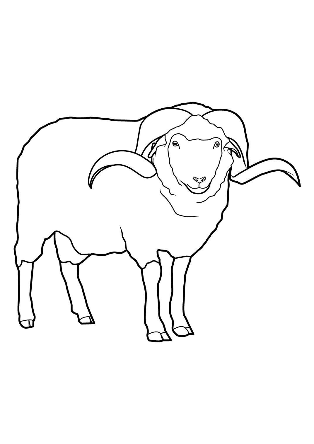 Coloriage Mouton 14 - Coloriage Moutons - Coloriages Animaux serapportantà Photo De Mouton A Imprimer