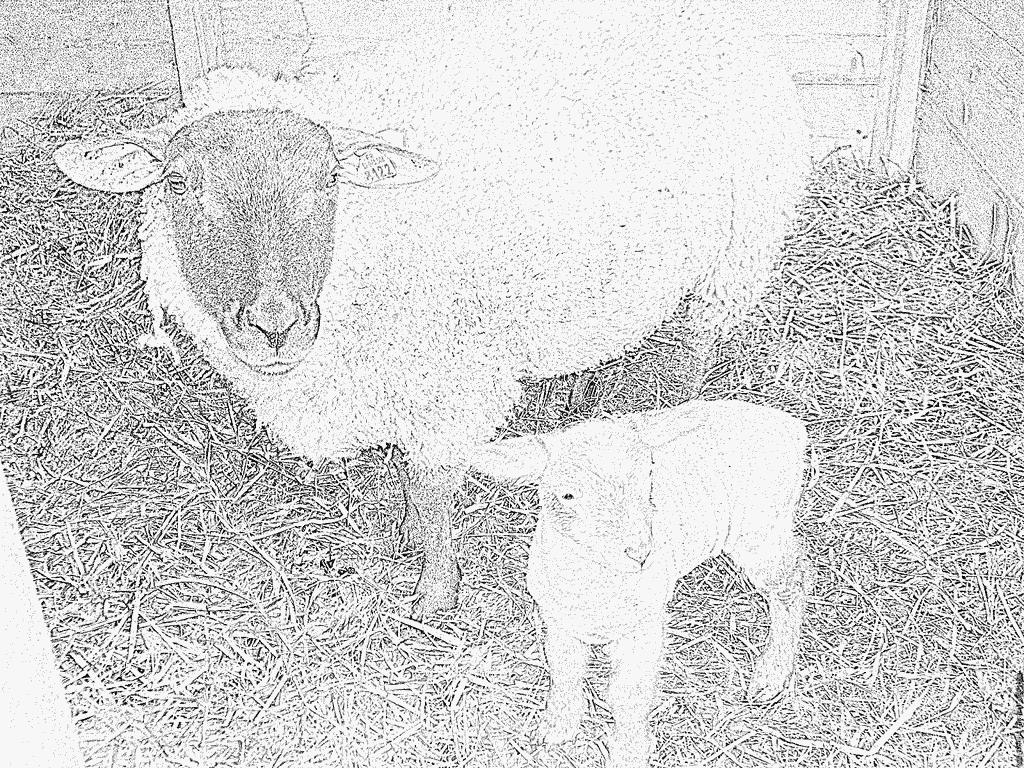 Coloriage Mouton Et Bb À Imprimer Pour Les Enfants - Dessin à Photo De Mouton A Imprimer