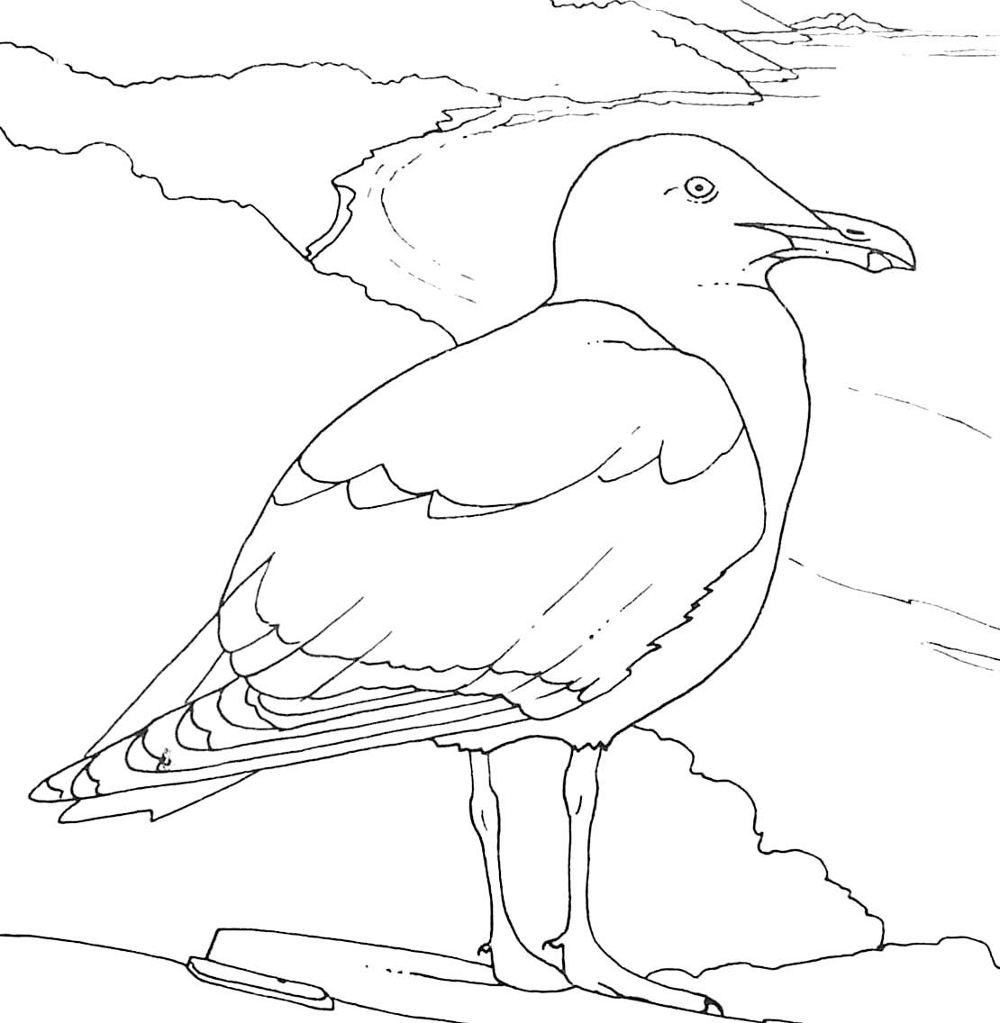 Coloriage Oiseau De Mer Goéland Argenté concernant Coloriage Sur La Mer À Imprimer