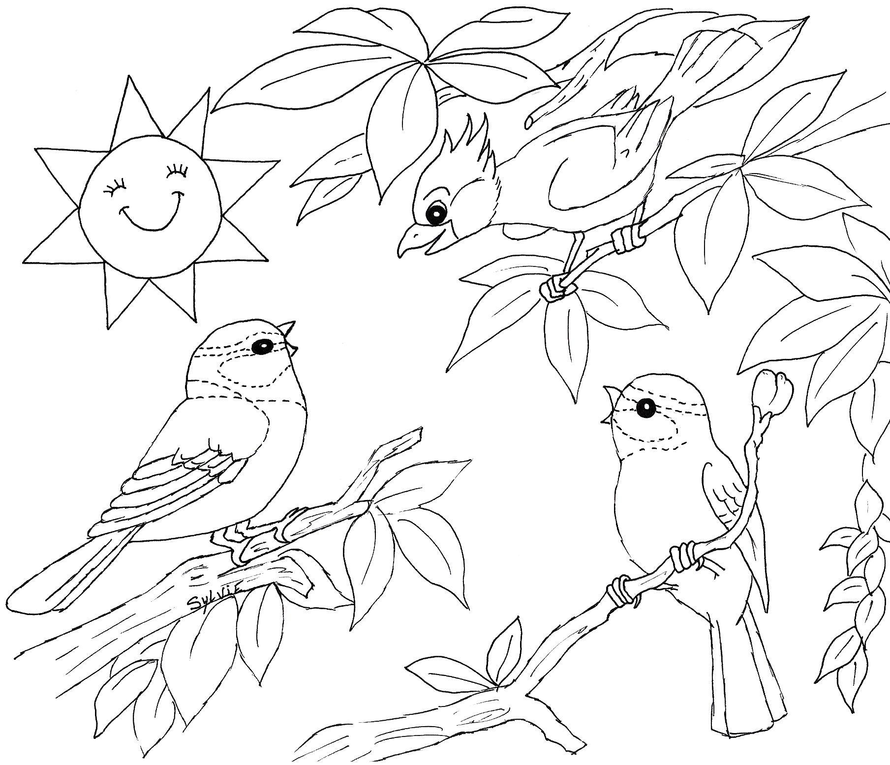 Coloriage Oiseaux - Les Beaux Dessins De Nature À Imprimer avec Coloriage A4 Imprimer Gratuit