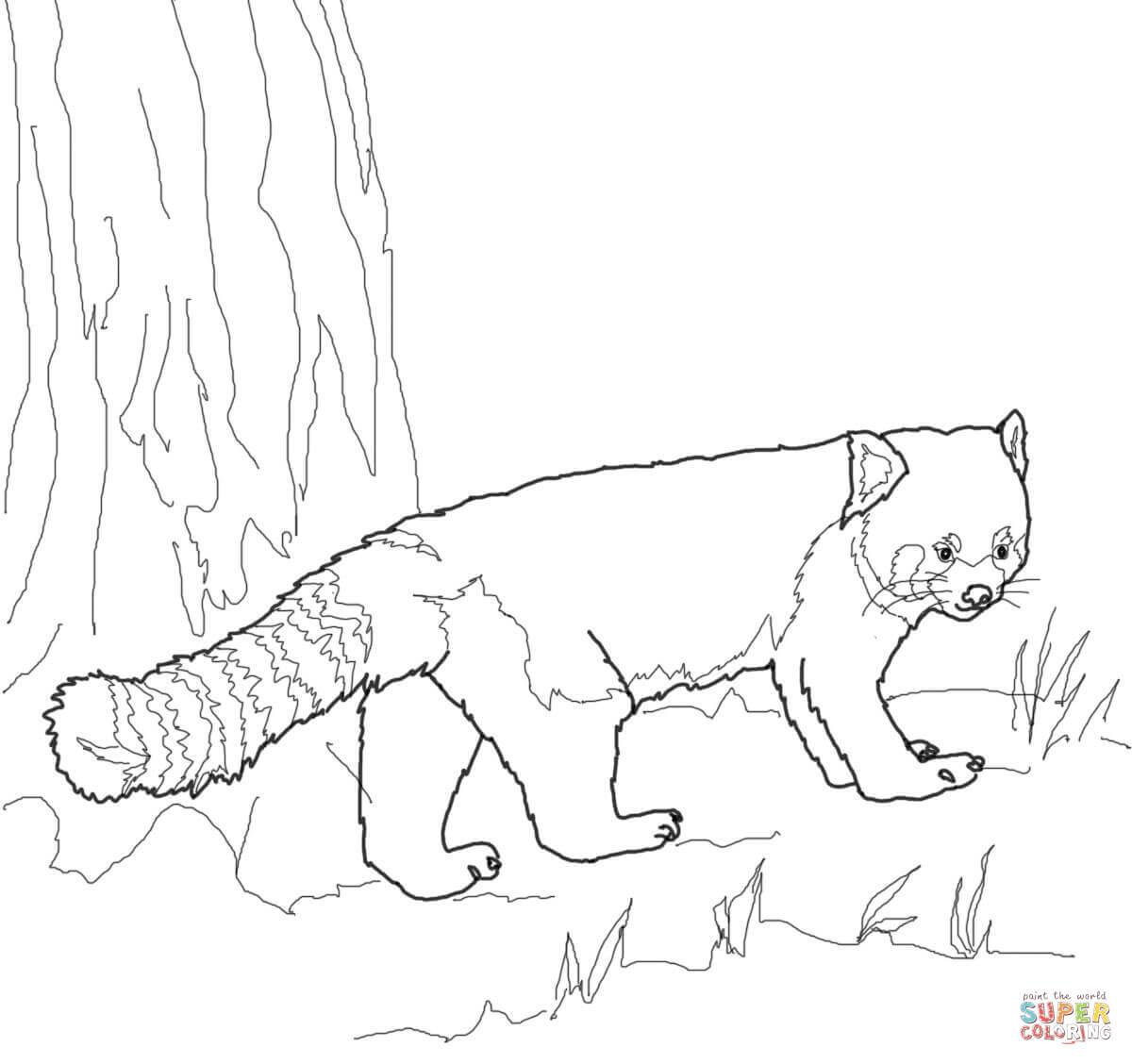 Coloriage - Panda Roux | Coloriages À Imprimer Gratuits encequiconcerne Panda À Colorier