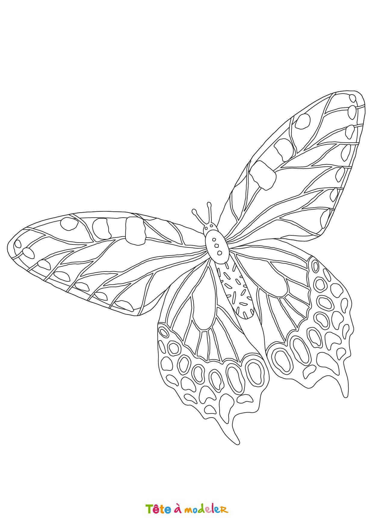 Coloriage Papillon #03 - Un Dessin De Tête À Modeler concernant Dessin Papillon À Colorier