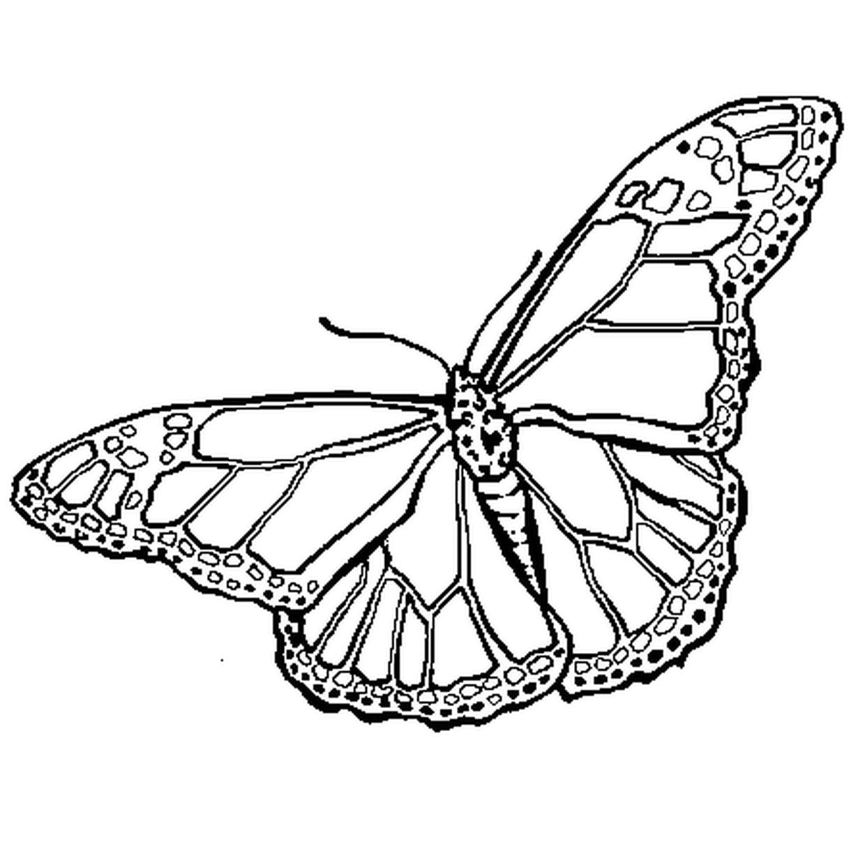 Coloriage Papillon En Ligne Gratuit À Imprimer avec Dessin A Imprimer Papillon Gratuit