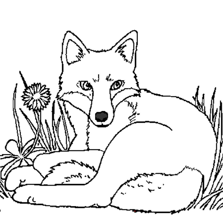 Coloriage Renard Couché Dans L'herbe En Ligne Gratuit À Imprimer tout Jeux De Renard Gratuit