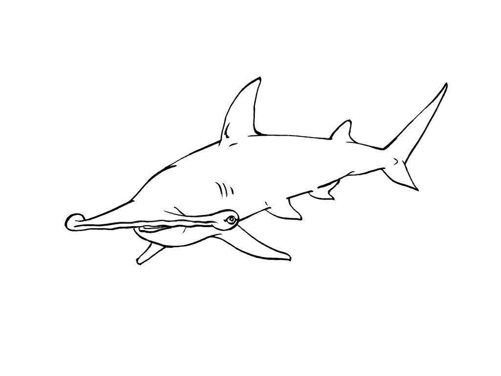 Coloriage Requin 10 - Coloriage Requins - Coloriages Animaux destiné Dessin De Requin À Imprimer