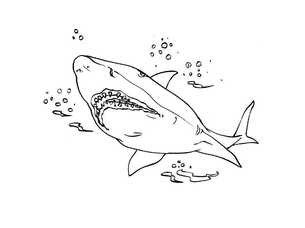 Coloriage Requin 4 - Coloriage Requins - Coloriages Animaux dedans Coloriage Requin Blanc Imprimer