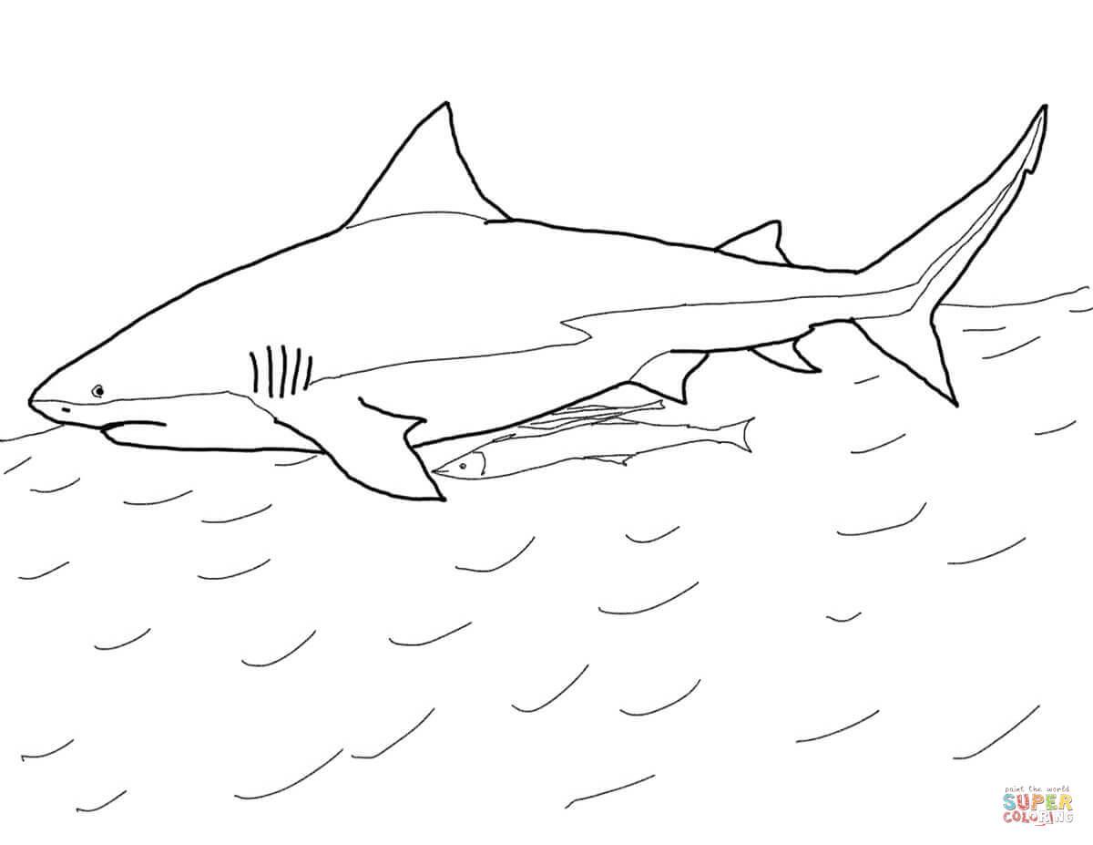 Coloriage - Requin-Bouledogue | Coloriages À Imprimer Gratuits serapportantà Coloriage Requin À Imprimer
