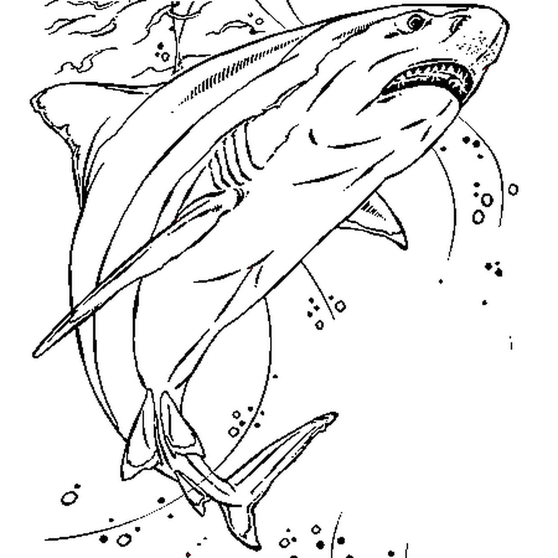 Coloriage Requin En Ligne Gratuit À Imprimer dedans Coloriage Requin Blanc Imprimer