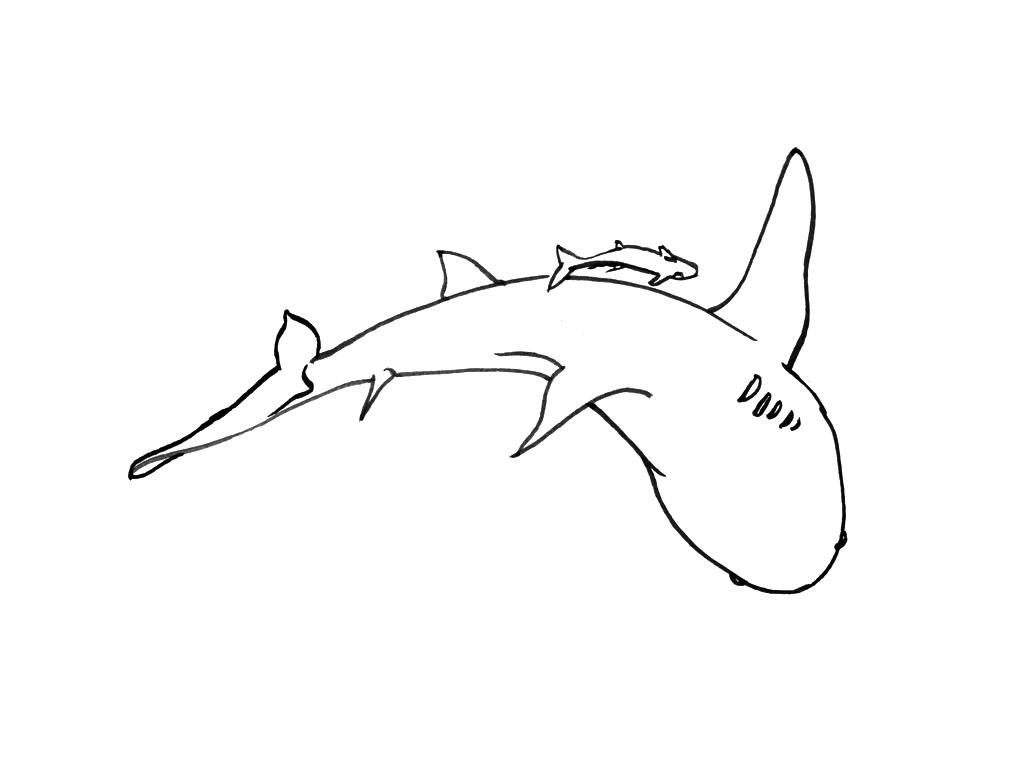 Coloriage Requin - Les Beaux Dessins De Animaux À Imprimer à Coloriage Requin Blanc Imprimer