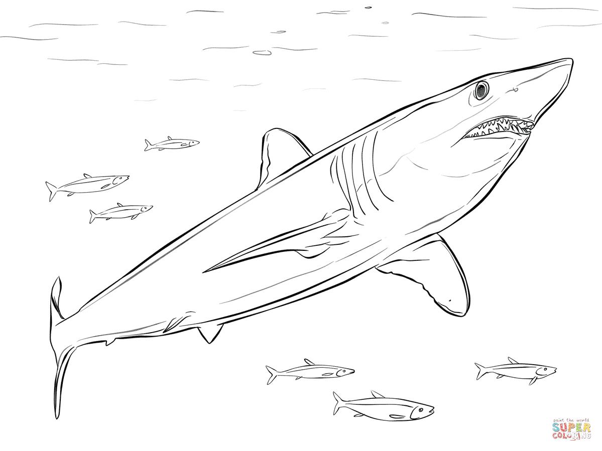 Coloriage - Requin Mako | Coloriages À Imprimer Gratuits avec Coloriage Requin Blanc Imprimer