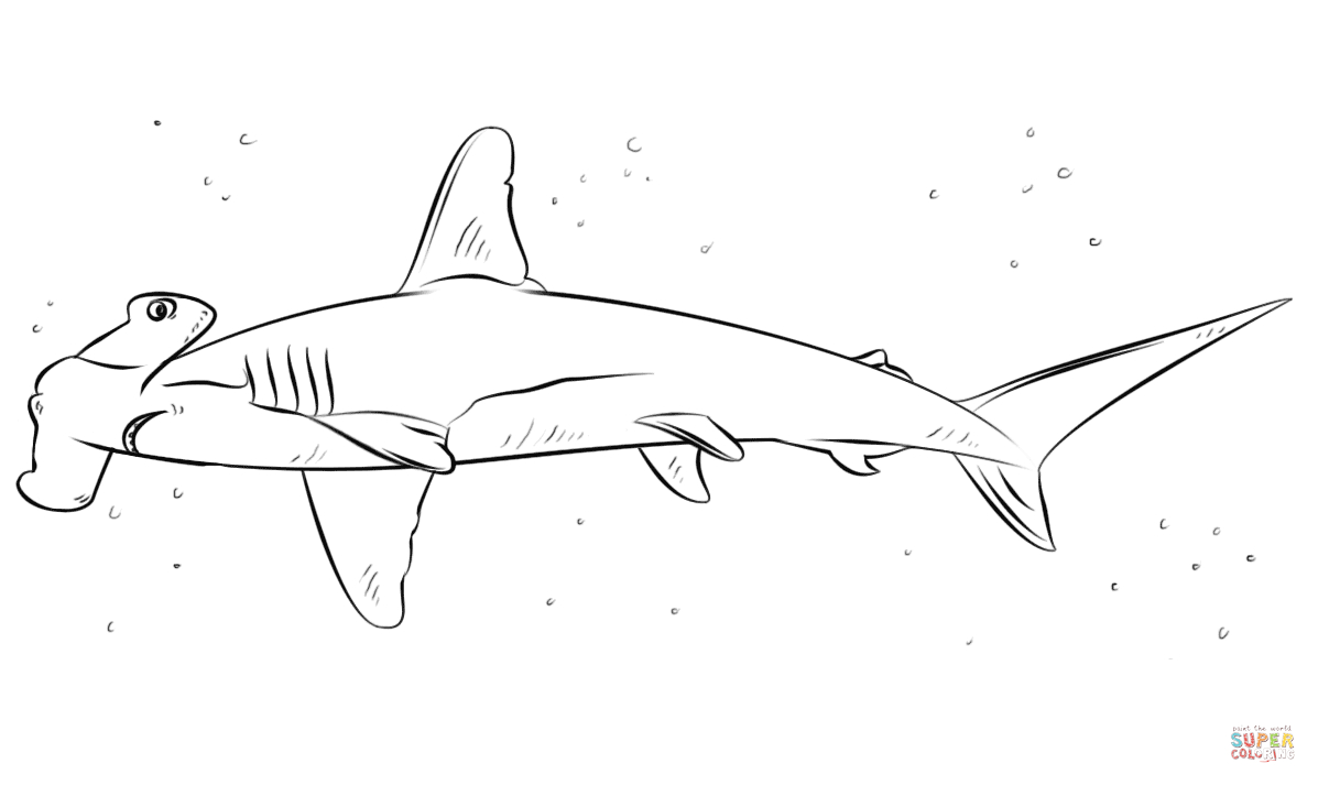 Coloriage - Requin-Marteau | Coloriages À Imprimer Gratuits dedans Coloriage Requin À Imprimer