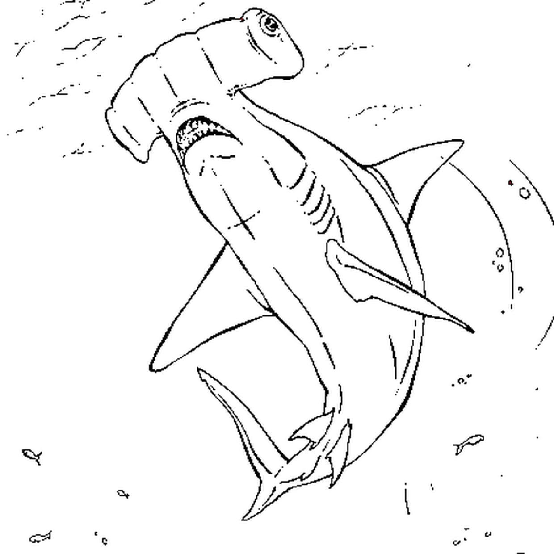Coloriage Requin Marteau En Ligne Gratuit À Imprimer intérieur Dessin De Requin À Imprimer