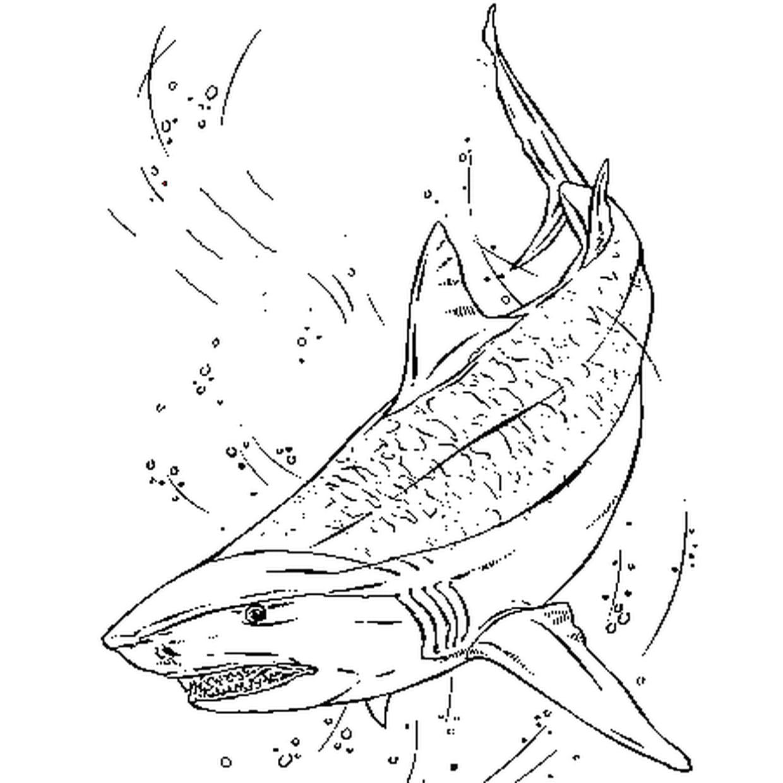 Coloriage Requin Tigre En Ligne Gratuit À Imprimer tout Dessin De Requin À Imprimer