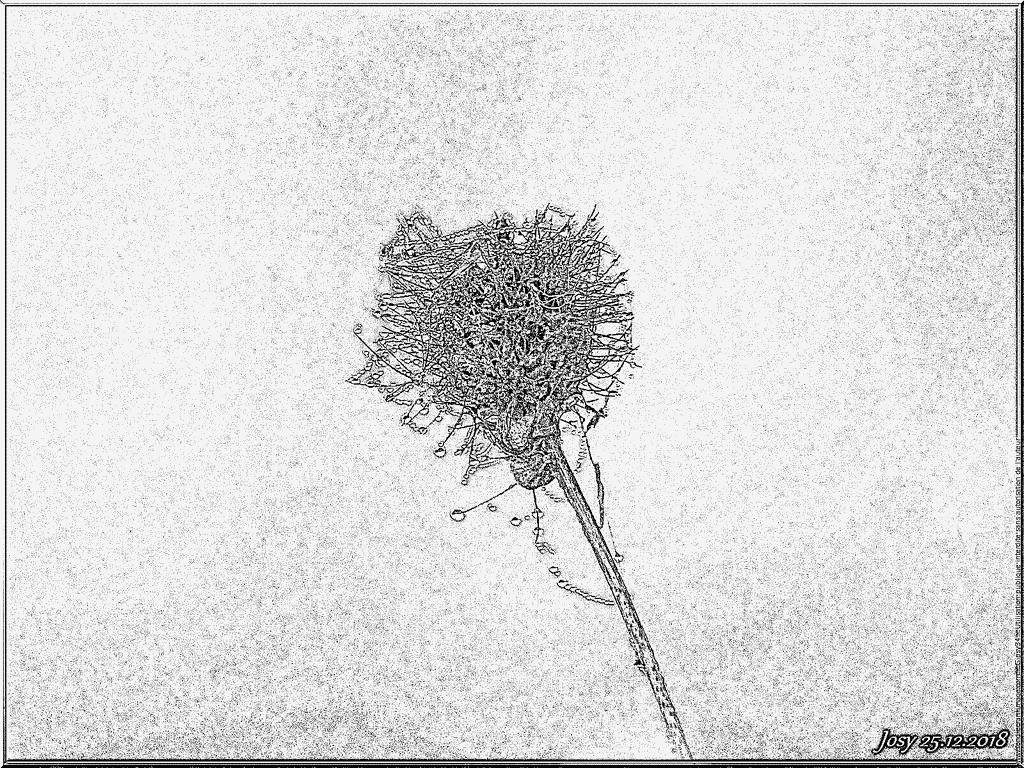 Coloriage Toile D Araignee Et Brouillard À Imprimer Pour Les encequiconcerne Dessin Toile Araignée