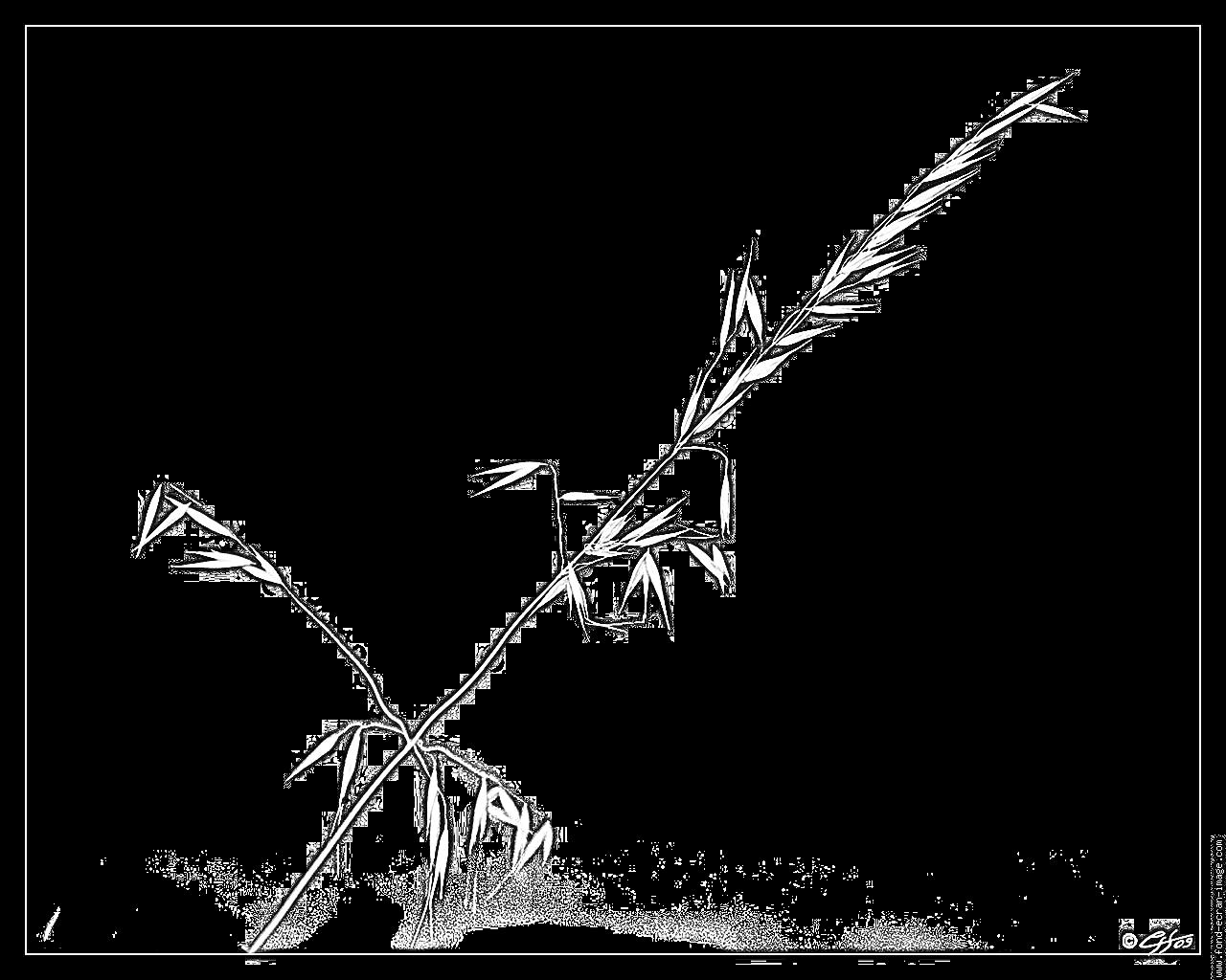 Coloriage Zen À Imprimer Pour Les Enfants - Dessin Nature Morte serapportantà Image Zen A Imprimer