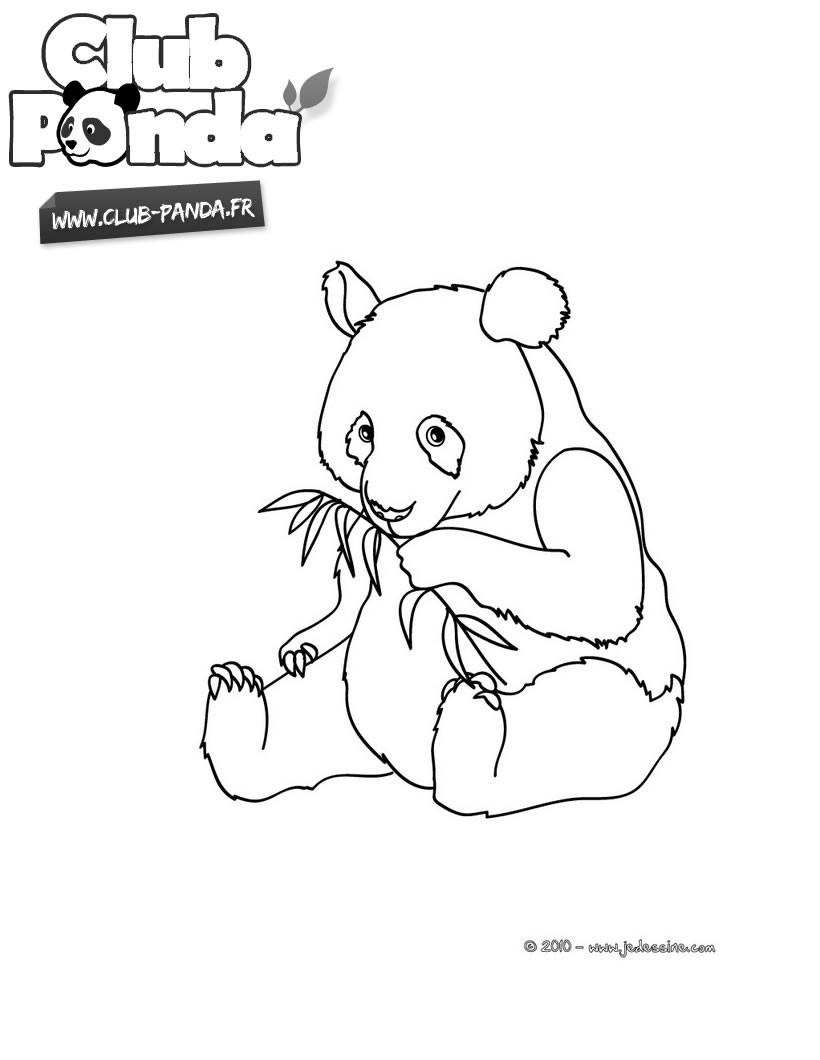 Coloriages Club-Panda - Coloriages - Coloriage À Imprimer dedans Panda À Colorier