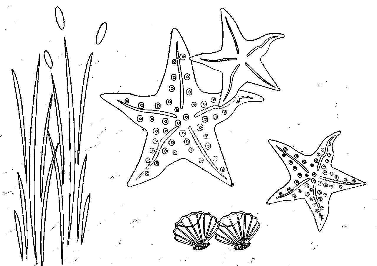 Coloriages D'étoiles De Mer À Imprimer - Coloriage À Imprimer tout Coloriage Sur La Mer À Imprimer