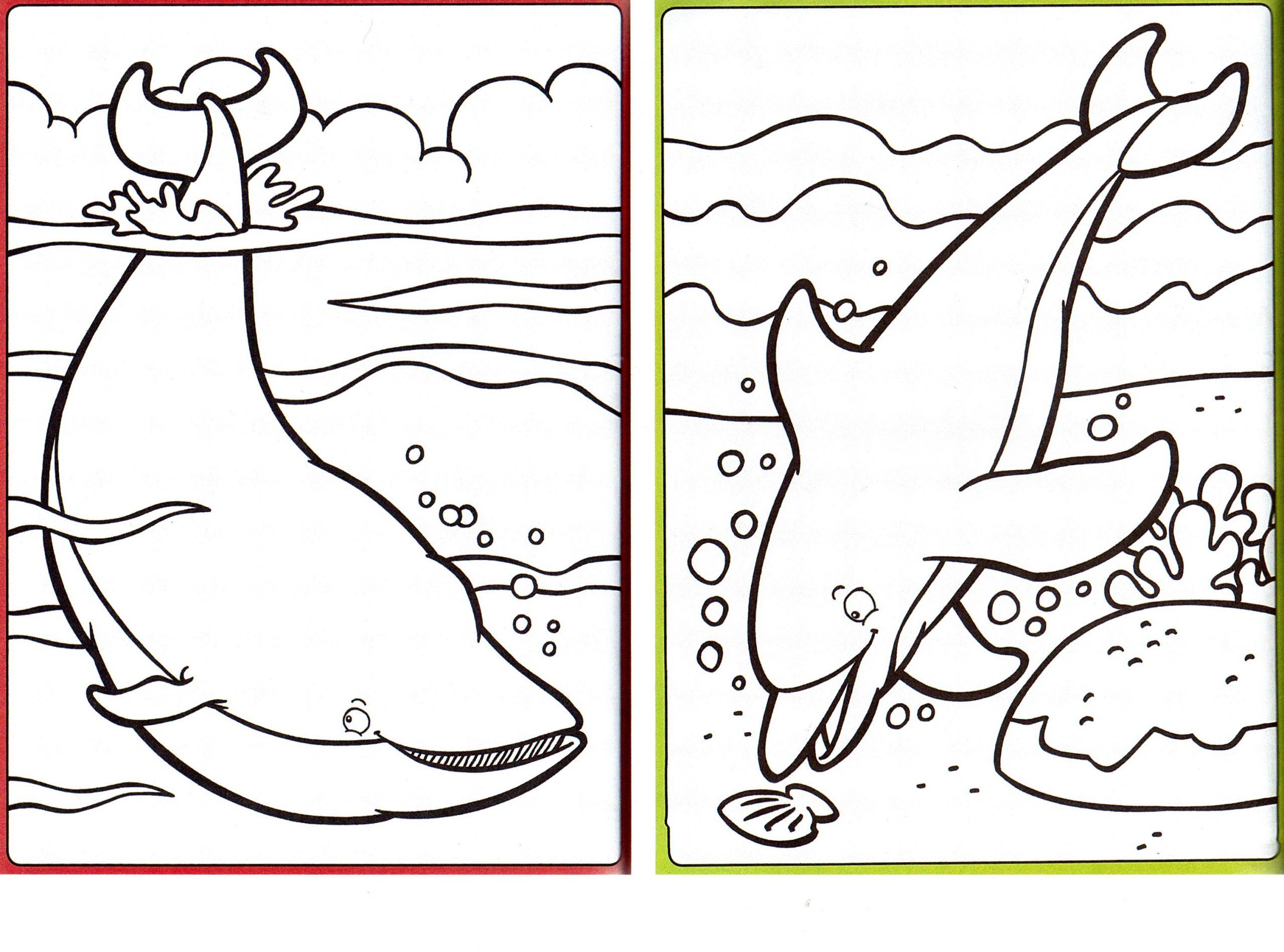 Coloriages | Objectifcairns pour Coloriage Requin À Imprimer