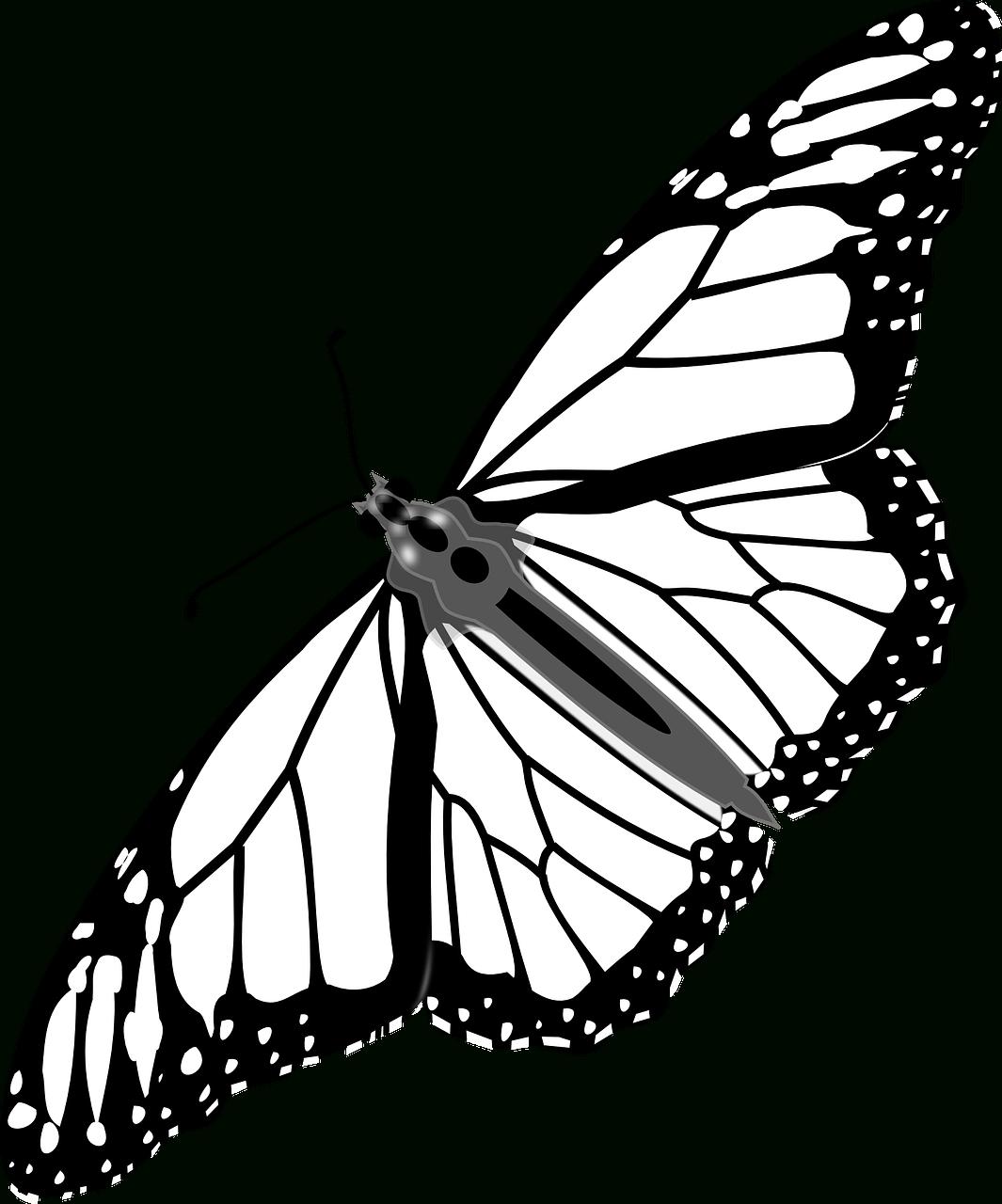 Coloriages Papillons À Imprimer. -Dessins De Papillons À avec Dessin A Imprimer Papillon Gratuit