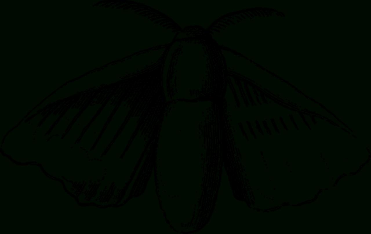 Coloriages Papillons À Imprimer. -Dessins De Papillons À concernant Dessin A Imprimer Papillon Gratuit