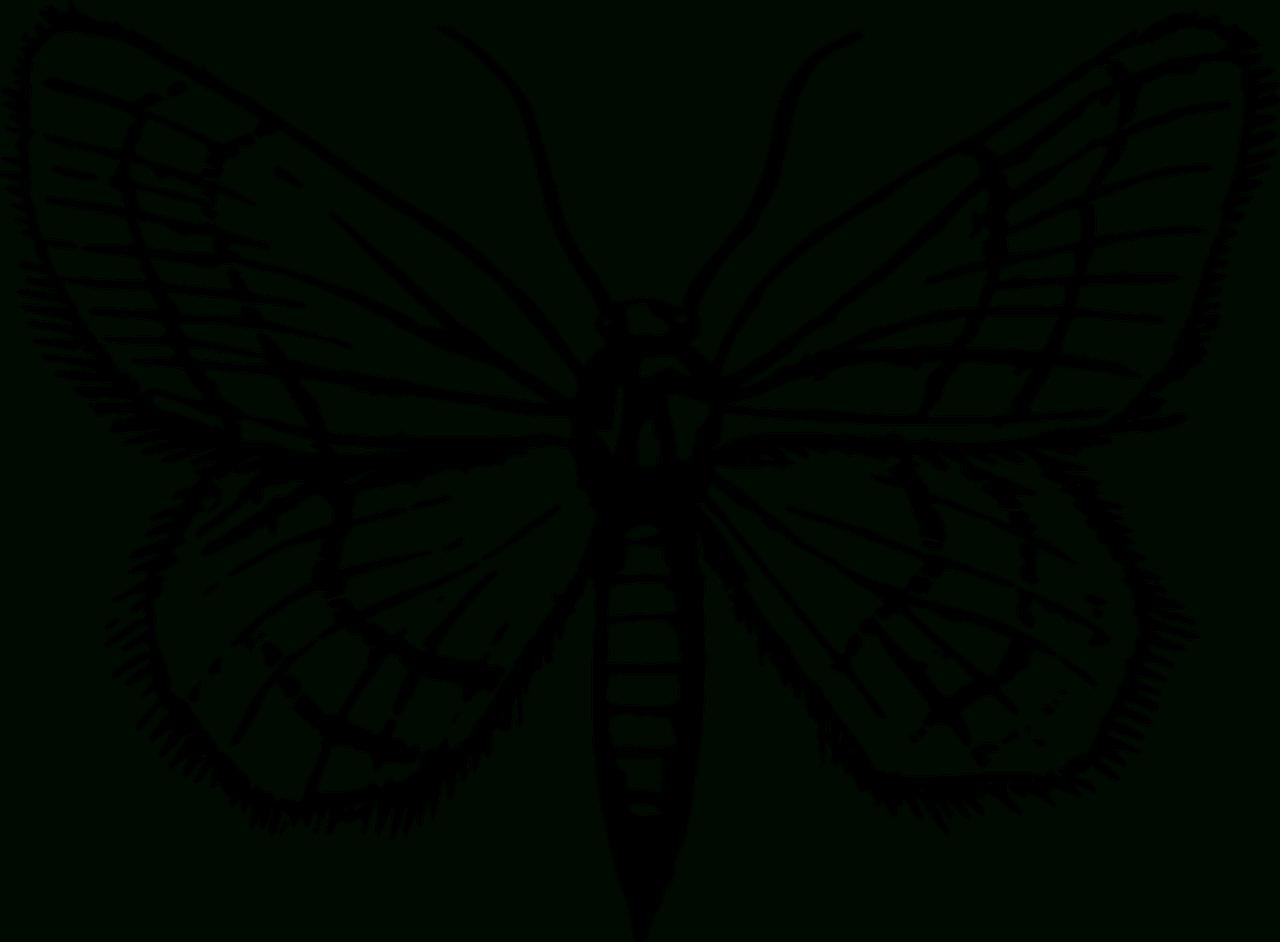 Coloriages Papillons À Imprimer. -Dessins De Papillons À serapportantà Dessin A Imprimer Papillon Gratuit