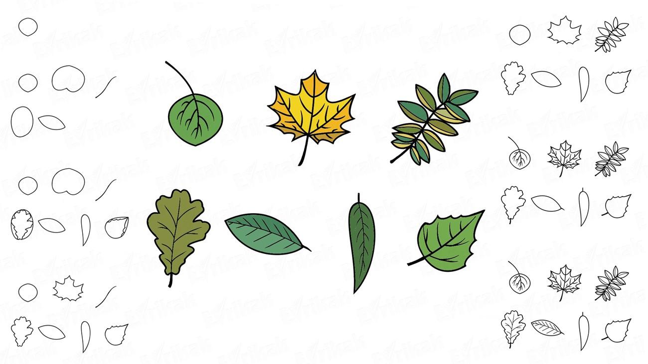 Comment Dessiner Des Feuilles D'automne Avec Un Crayon concernant Dessin De Feuille D Automne