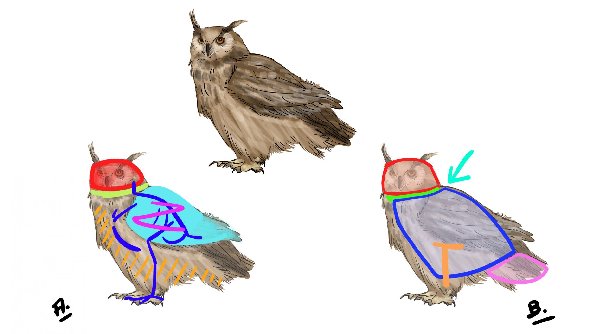 Comment Dessiner Un Hibou - Dessindigo pour Dessiner Un Hibou