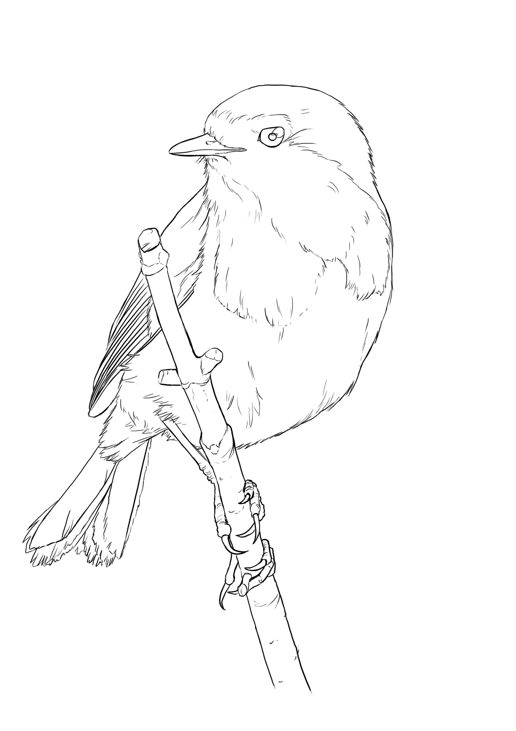 Comment Dessiner Un Oiseau Facilement - Dessindigo intérieur Dessin D Oiseau Simple