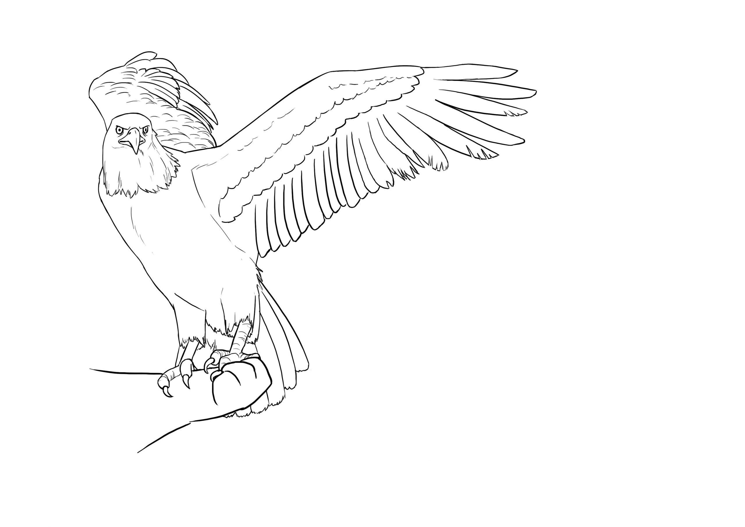 Comment Dessiner Un Oiseau Facilement - Dessindigo serapportantà Dessin D Oiseau Simple