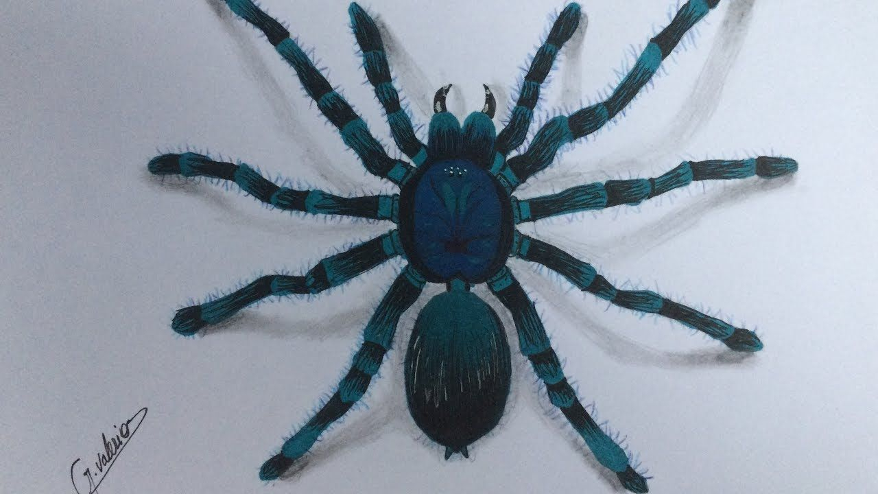 Comment Dessiner Une Araignée Réaliste - Speed Drawing 3D destiné Dessiner Une Araignee