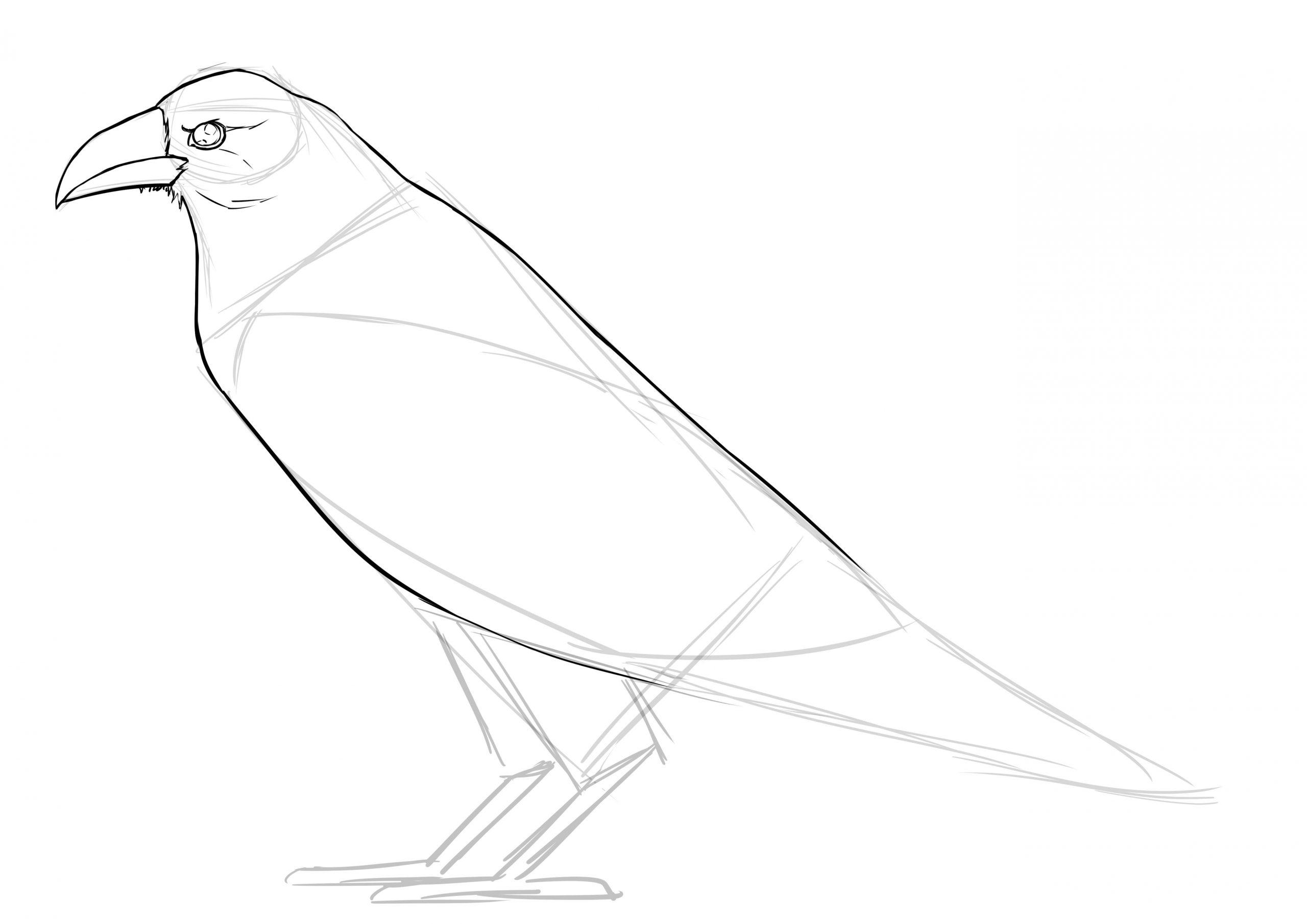 Comment Réaliser Un Dessin De Corbeau - Dessindigo concernant Dessin D Oiseau Simple