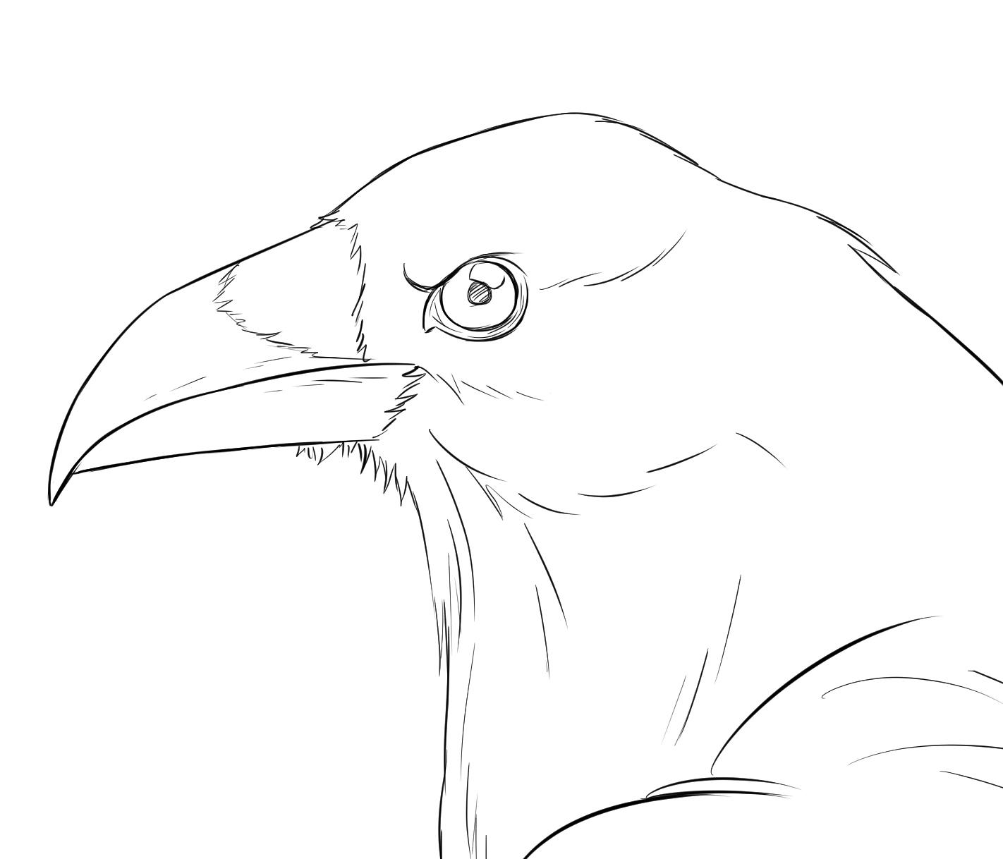 Comment Réaliser Un Dessin De Corbeau - Dessindigo intérieur Dessin D Oiseau Simple