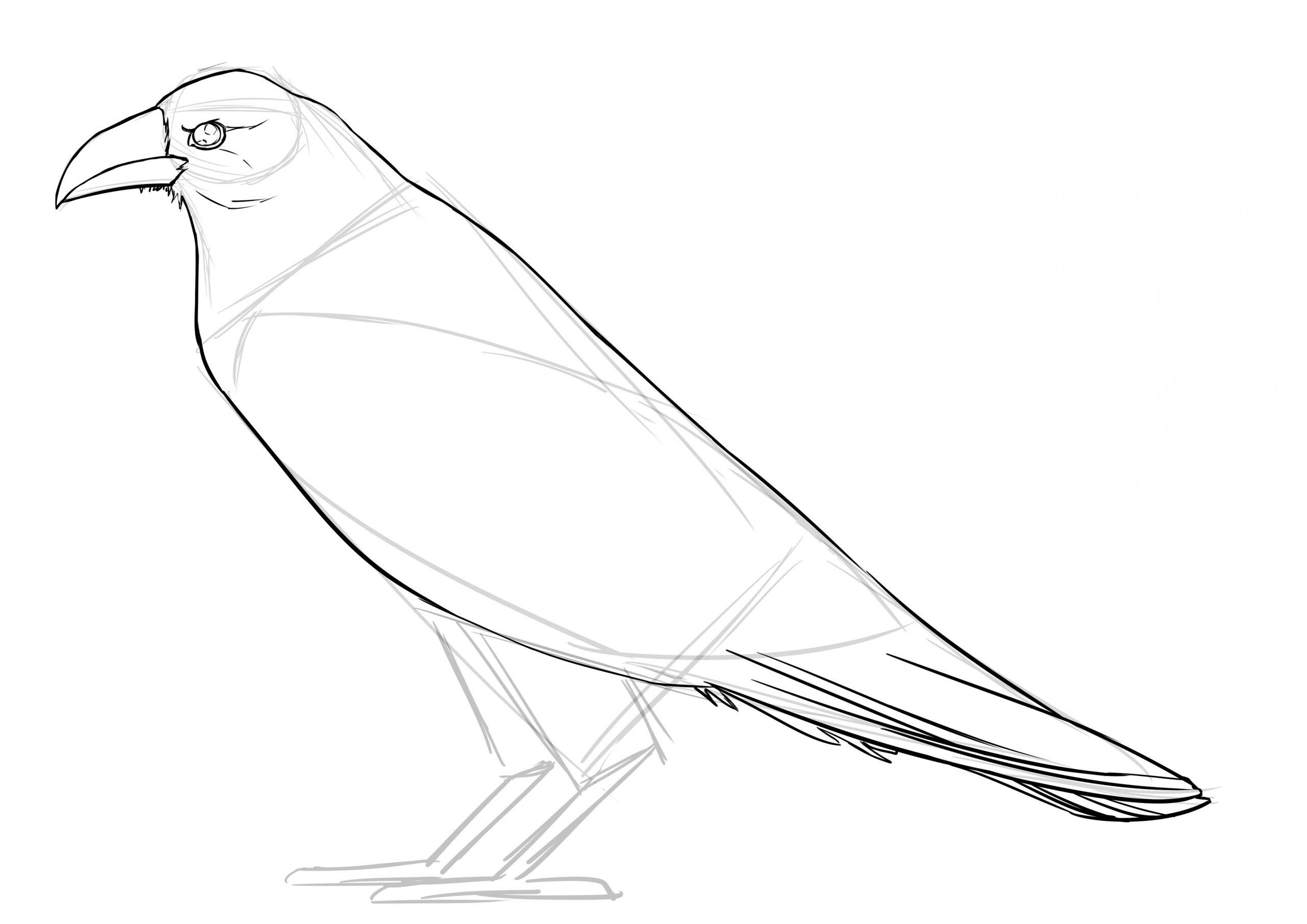 Comment Réaliser Un Dessin De Corbeau - Dessindigo intérieur Dessin De Cage D Oiseau