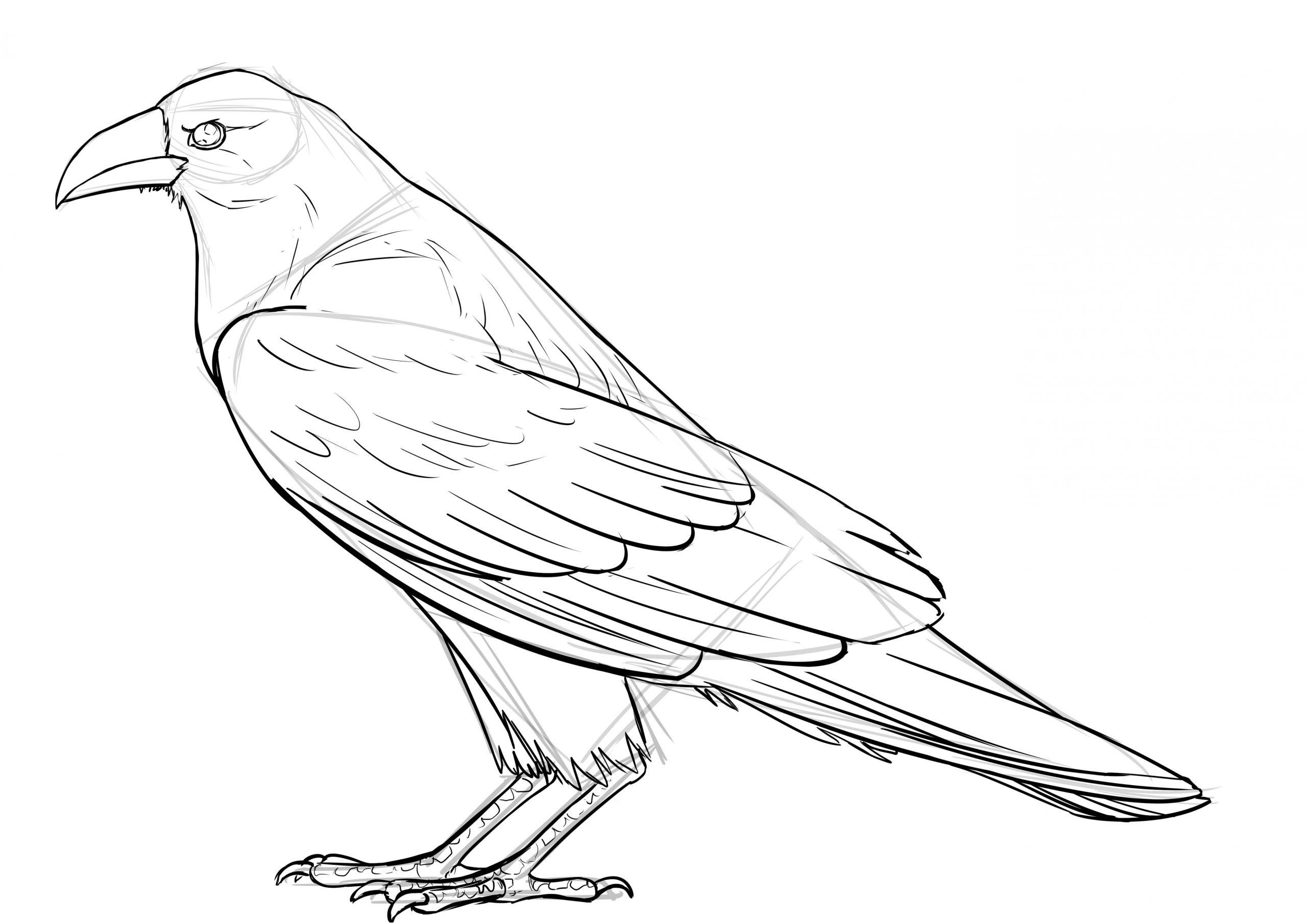 Comment Réaliser Un Dessin De Corbeau - Dessindigo tout Dessin D Oiseau Simple