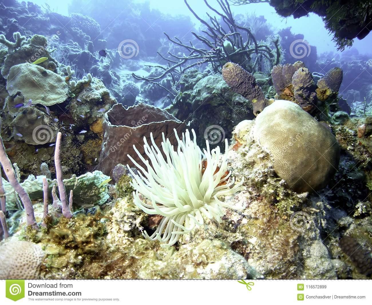 Coral Reef Vive Avec La Mer Anemone Front Et Le Centre Image destiné Anémone Des Mers