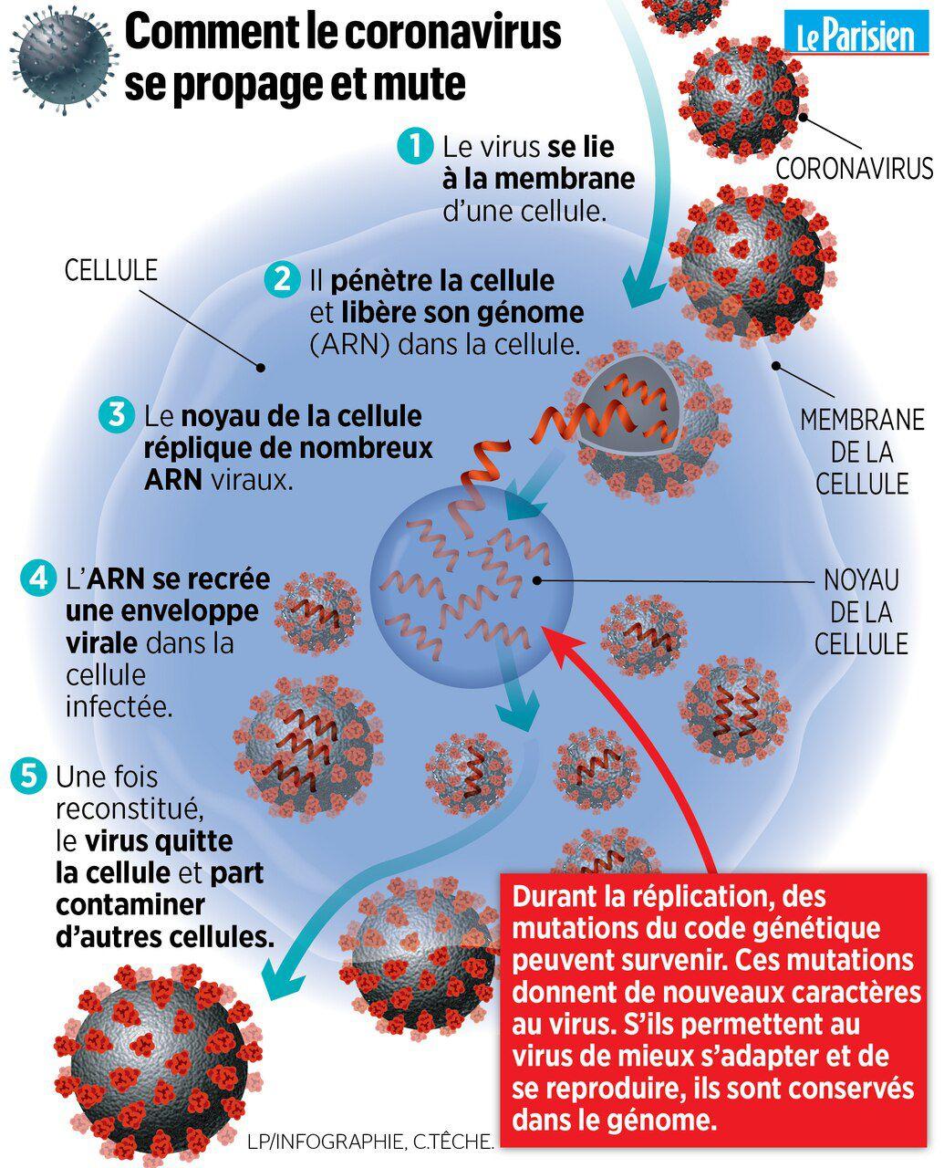 Coronavirus : 613 Personnes Contaminées En France - Le Parisien tout Combien De Departement En France