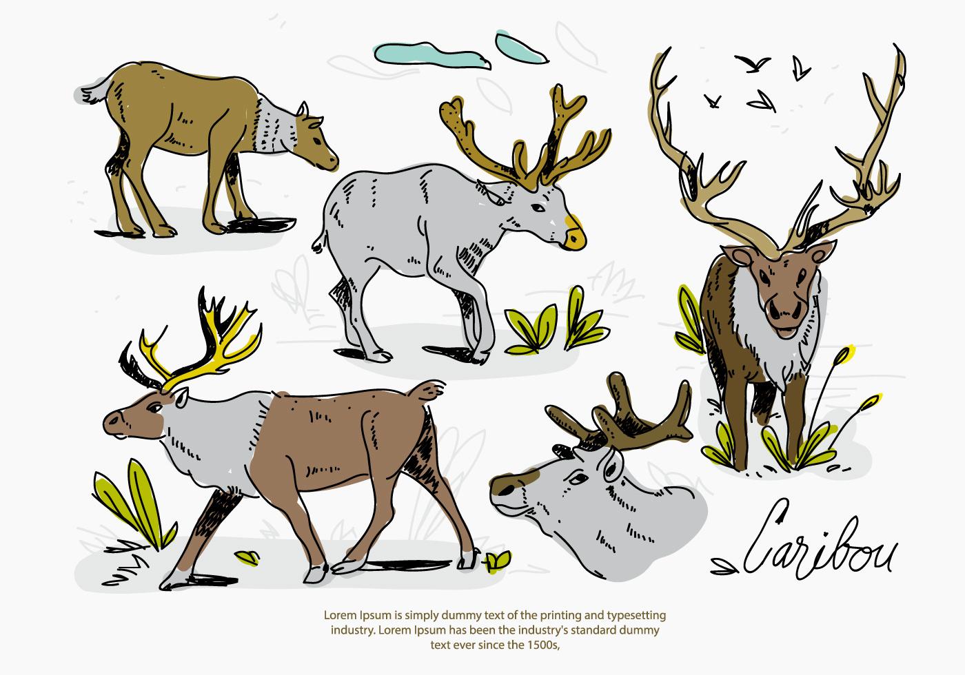 Croquis De Cerf-Volant De Caribou Illustration À Dessin tout Caribou Dessin