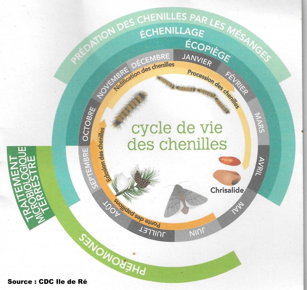 Cycle De Vie De La Chenille Processionnaire Du Pin à Cycle De Vie D Une Chenille